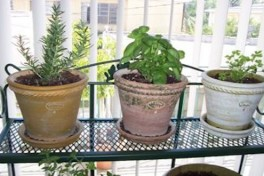 Apartment Gardener's Saturday Photo