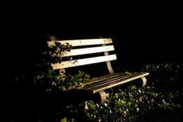 The Evening Garden: A Sensory Delight Photo