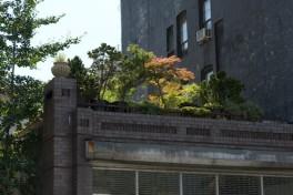 Rooftop Gardening Photo