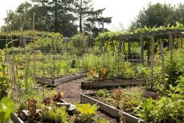 Raised Bed Gardening Photo