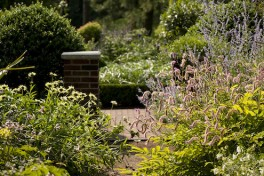 Plants for Landscaping Photo