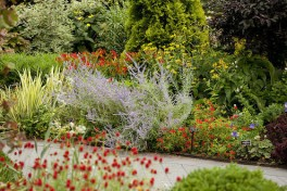 Perennial Plant Combinations Photo