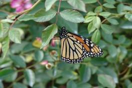 Gardening to Attract Pollinators Photo