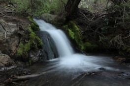 Advanced Landscapes: Forest, Waterfalls and Trees Photo