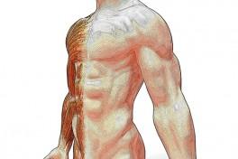 Anatomy and Physiology Photo