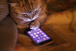 PhoneGap 101: Utilizing Web Technologies for Mobile Photo
