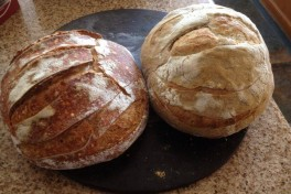 The Culture of Sourdough Photo