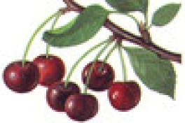Saving The Season: Cherries Photo