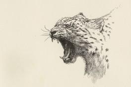 Animal Drawing Photo