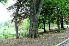 Prospect Park Photo