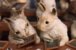 Anthropomorphic Rabbit Taxidermy Class Photo