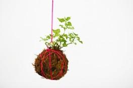 Kokedama: Make Your Own Living Moss Balls Photo
