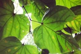 Tree Identification Photo