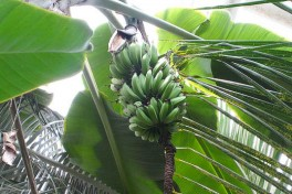 Edible Tour of the Tropical Pavilion Photo